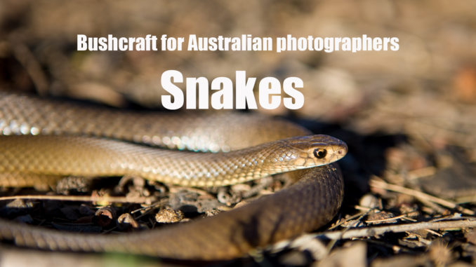 Promo picture from Excitations Photo Adventures workshops and photo tours. Image is of a young Eastern Brown Snake from video called snakes and photographers.